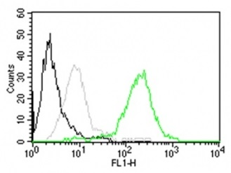 CD63 Antibody Clone MX-49.129.5