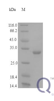 QP10157 Fructose-2
