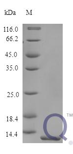 QP10179 Trefoil factor 2