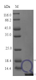 QP10182 Thymosin beta-4