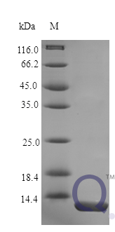 QP10183 Nucleobindin-2