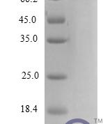 QP10206 CXCL2 / MIP-2