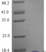 QP10207 CXCL3 / GRO gamma