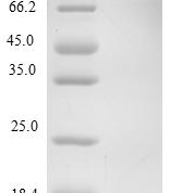 QP10218 CXCL12 / SDF-1