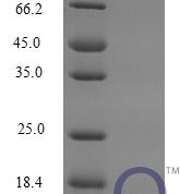 QP10266 CCL6 / C-C motif ligand 6