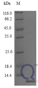 QP10267 MCP-3 / CCL7