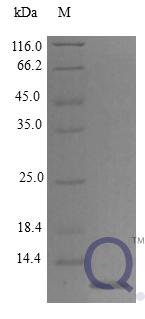 QP10270 CCL11 / Eotaxin