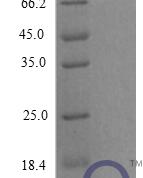 QP10280 CXCL1 / MGSA / NAP-3