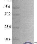QP10286 CXCL10 / Crg-2