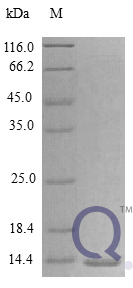 QP10302 IL-15