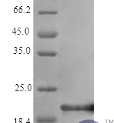QP10313 IL6 / Interleukin-6 Protein