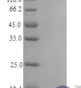QP10330 IL1F6 / IL36