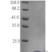 QP10352 TNF-alpha