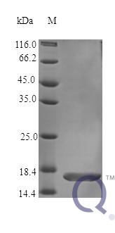 QP10353 TNF-alpha