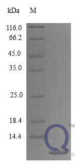QP10394 EGF / Epidermal Growth Factor