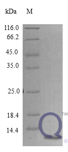 QP10396 Epigen