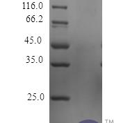 QP10470 TNF-alpha