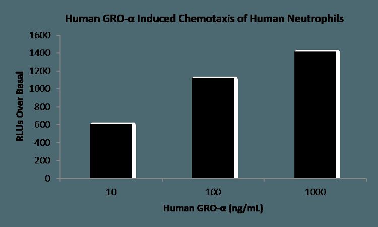 QP1008 CXCL1 / GRO-alpha