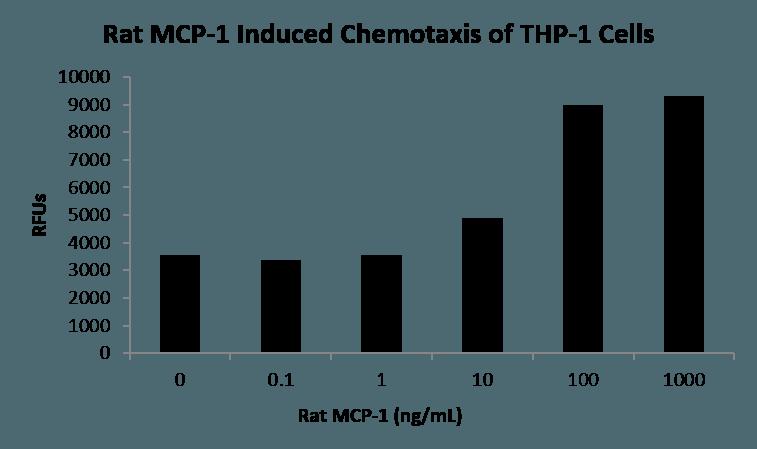 QP5509 CCL2 / MCP-1 / MCP1