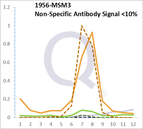 Analysis of Mass Spec data (dashed-line) of fractions stained with EGFR MS-QAVA™ monoclonal antibody [Clone: H9B4] (solid-line), reveals that less than 13.1% of signal is attributable to non-specific binding of anti-EGFR [Clone H9B4] to targets other than EGFR protein. Even frequently cited antibodies have much greater non-specific interactions, averaging over 30%. Data in image is from analysis in Jurkat, U202 and HeLa cells.