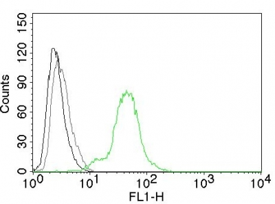 Flow Cytometry of human ER beta on BT474 Cells. Black: Cells alone; Grey: Isotype Control; Green: Alexa Fluor® 488-labeled ER beta Monoclonal Antibody (Erb455).