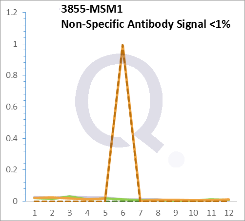 Analysis of Mass Spec data (dashed-line) of fractions stained with Cytokeratin 7 MS-QAVA™ monoclonal antibody [Clone: OV-TL12/30] (solid-line), reveals that less than 0.3% of signal is attributable to non-specific binding of anti-Cytokeratin 7 [Clone OV-TL12/30] to targets other than KRT7 protein. Even frequently cited antibodies have much greater non-specific interactions, averaging over 30%. Data in image is from analysis in Jurkat, U202 and HeLa cells.