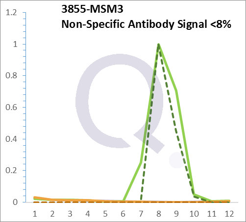 Analysis of Mass Spec data (dashed-line) of fractions stained with Cytokeratin 7 MS-QAVA™ monoclonal antibody [Clone: KRT7/903] (solid-line), reveals that less than 7.5% of signal is attributable to non-specific binding of anti-Cytokeratin 7 [Clone KRT7/903] to targets other than KRT7 protein. Even frequently cited antibodies have much greater non-specific interactions, averaging over 30%. Data in image is from analysis in A431, RT4 and MCF7 cells.