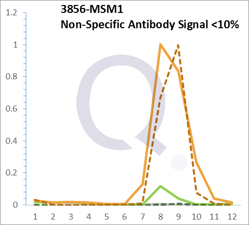 Analysis of Mass Spec data (dashed-line) of fractions stained with Cytokeratin 8 MS-QAVA™ monoclonal antibody [Clone: H1] (solid-line), reveals that less than 11.6% of signal is attributable to non-specific binding of anti-Cytokeratin 8 [Clone H1] to targets other than KRT8 protein. Even frequently cited antibodies have much greater non-specific interactions, averaging over 30%. Data in image is from analysis in Jurkat, U202 and HeLa cells.