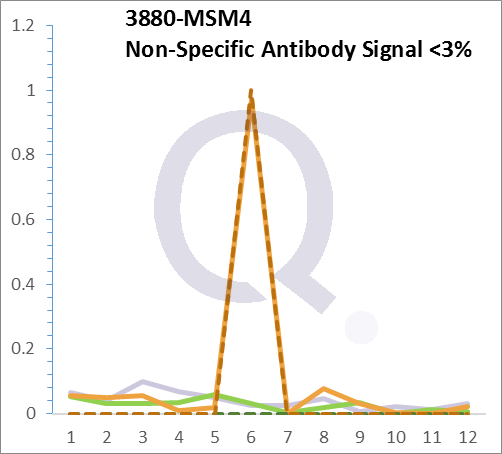 Analysis of Mass Spec data (dashed-line) of fractions stained with Cytokeratin 19 MS-QAVA™ monoclonal antibody [Clone: KRT19/799] (solid-line), reveals that less than 2.3% of signal is attributable to non-specific binding of anti-Cytokeratin 19 [Clone KRT19/799] to targets other than KRT19 protein. Even frequently cited antibodies have much greater non-specific interactions, averaging over 30%. Data in image is from analysis in Jurkat, U202 and HeLa cells.