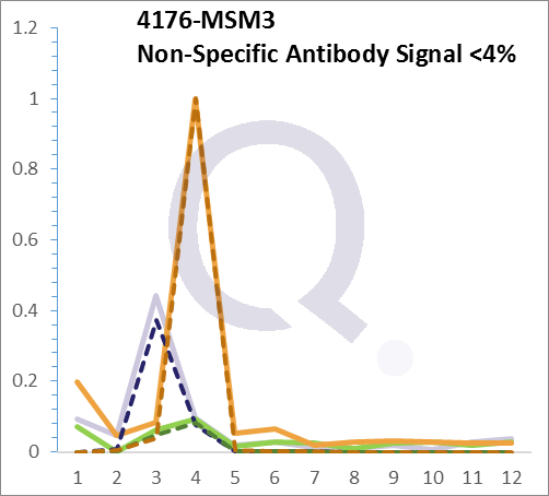 Analysis of Mass Spec data (dashed-line) of fractions stained with MCM7 MS-QAVA™ monoclonal antibody [Clone: MCM7/1468] (solid-line), reveals that less than 3.8% of signal is attributable to non-specific binding of anti-MCM7 [Clone: MCM7/1468] to targets other than MCM7 protein. Even frequently cited antibodies have much greater non-specific interactions, averaging over 30%. Data in image is from analysis in A431, RT4 and MCF7 cells.