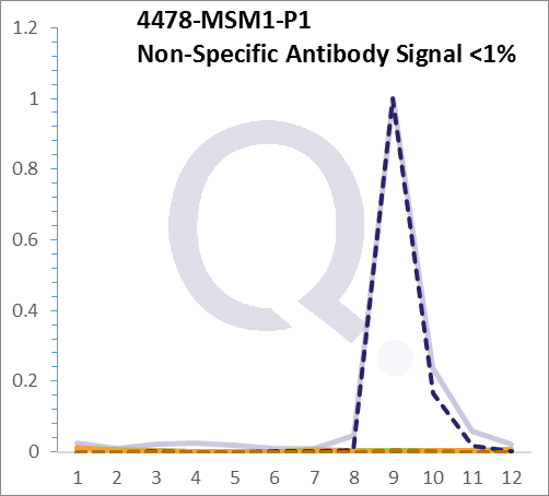 Analysis of Mass Spec data (dashed-line) of fractions stained with Moesin MS-QAVA™ monoclonal antibody [Clone: MSN/491] (solid-line), reveals that less than 0.8% of signal is attributable to non-specific binding of anti-Moesin [Clone: MSN/491] to targets other than MSN protein. Even frequently cited antibodies have much greater non-specific interactions, averaging over 30%. Data in image is from analysis in A431, RT4 and MCF7 cells.