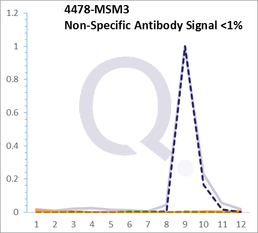 Analysis of Mass Spec data (dashed-line) of fractions stained with Moesin MS-QAVA™ monoclonal antibody [Clone: MSN/493] (solid-line), reveals that less than 0.7% of signal is attributable to non-specific binding of anti-Moesin [Clone MSN/493] to targets other than MSN protein. Even frequently cited antibodies have much greater non-specific interactions, averaging over 30%. Data in image is from analysis in A431, RT4 and MCF7 cells.