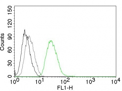 Flow Cytometry of human ODC1 on PC3 Cells. Black: Cells alone; Grey: Isotype Control; Green: Alexa Fluor® 488-labeled ODC1 Monoclonal Antibody (ODC1/485).