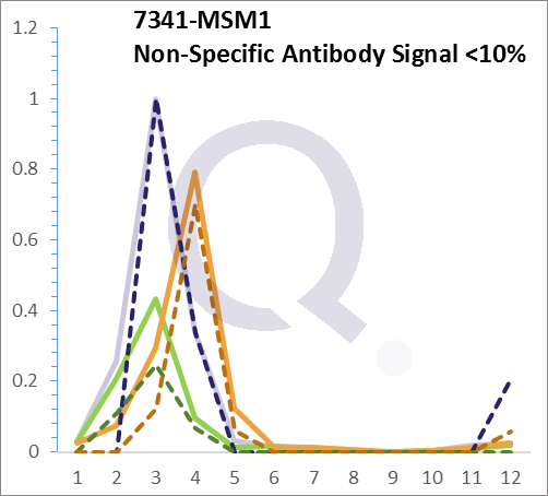 Analysis of Mass Spec data (dashed-line) of fractions stained with SUMO-1 MS-QAVA™ monoclonal antibody [Clone: SM1/495] (solid-line), reveals that less than 9.8% of signal is attributable to non-specific binding of anti-SUMO-1  [Clone SM1/495] to targets other than SUMO1 protein. Even frequently cited antibodies have much greater non-specific interactions, averaging over 30%. Data in image is from analysis in A431, RT4 and MCF7 cells.