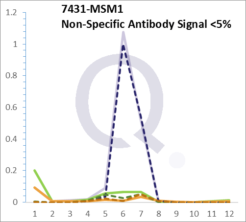 Analysis of Mass Spec data (dashed-line) of fractions stained with Vimentin Anti-Human MS-QAVA™ monoclonal antibody [Clone: VM452] (solid-line), reveals that less than 4.2% of signal is attributable to non-specific binding of anti-Vimentin [Clone:  VM452 ] to targets other than VIM protein. Even frequently cited antibodies have much greater non-specific interactions, averaging over 30%. Data in image is from analysis in Jurkat, U202 and HeLa cells.