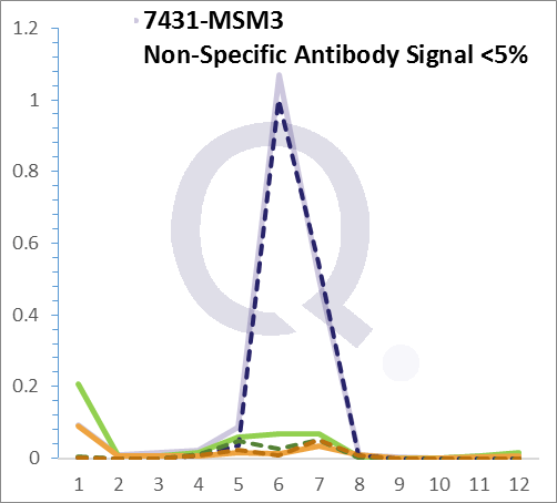 Analysis of Mass Spec data (dashed-line) of fractions stained with Vimentin MS-QAVA™ monoclonal antibody [Clone: VM1170] (solid-line), reveals that less than 4.5% of signal is attributable to non-specific binding of anti-Vimentin [Clone VM1170] to targets other than VIM protein. Even frequently cited antibodies have much greater non-specific interactions, averaging over 30%. Data in image is from analysis in Jurkat, U202 and HeLa cells.