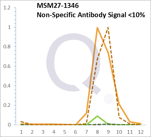 Analysis of Mass Spec data (dashed-line) of fractions stained with Cytokeratin 8/18 MS-QAVA™ monoclonal antibody [Clone: KRT8.18/1346] (solid-line), reveals that less than 14.2% of signal is attributable to non-specific binding of anti-Cytokeratin 8/18 [Clone: KRT8.18/1346] to targets other than KRT8 & KRT18 protein. Even frequently cited antibodies have much greater non-specific interactions, averaging over 30%. Data in image is from analysis in Jurkat, U202 and HeLa cells.