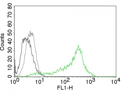 Flow Cytometry of Human Nucleolin Ag on 293T Cells. Black: Cells alone; Grey: Isotype Control; Green: AF488-labeled Nucleolin Monoclonal Antibody (364-5).