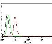 Flow Cytometry of human Cyclin D1 on MCF-7 Cells. Black: Cells alone; Green: Isotype Control; Red: PE-labeled Cyclin D1 Monoclonal Antibody (DCS-6).
