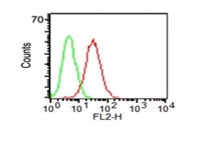 Flow Cytometry of KG-1 cells using CD34 Monoclonal Antibody (HPCA1/1171) (red) & isotype control (green).