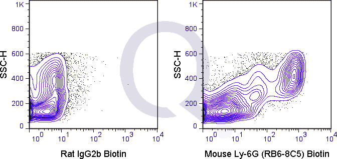 C57Bl/6 bone marrow cells were stained with 0.06 ug Biotin Mouse Anti-Ly-6G (QAB77) (right panel) or 0.06 ug Biotin Rat IgG2b isotype control (left panel) followed by Streptavidin FITC.