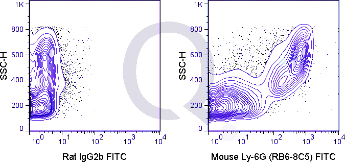 C57Bl/6 bone marrow cells were stained with 0.5 ug FITC Mouse Anti-Ly-6G (QAB77) (right panel) or 0.5 ug FITC Rat IgG2b isotype control (left panel).
