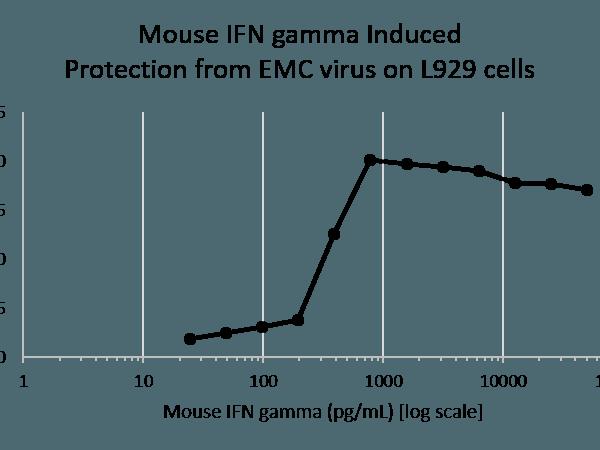 QP4141 IFNG / Interferon Gamma