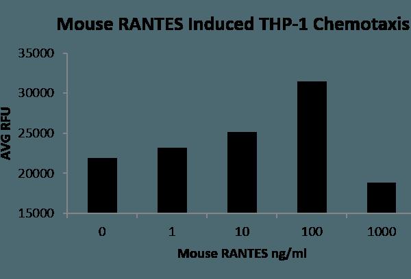 QP5453 CCL5 / RANTES
