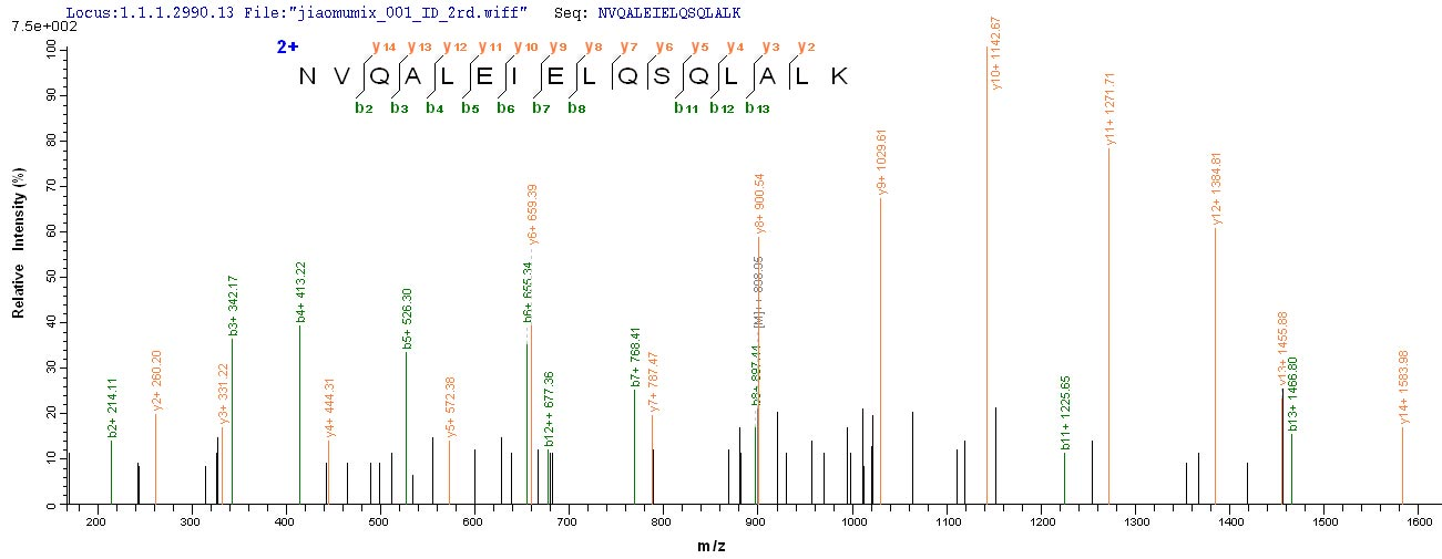 SEQUEST analysis of LC MS/MS spectra obtained from a run with QP6275 identified a match between this protein and the spectra of a peptide sequence that matches a region of Cytokeratin 10.