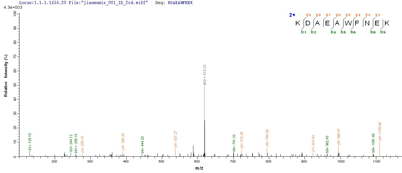 Additional SEQUEST analysis of the LC MS/MS spectra from QP6275 identified an additional between this protein and the spectra of another peptide sequence that matches a region of Cytokeratin 10 confirming successful recombinant synthesis.