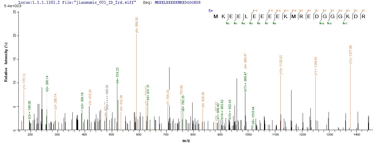 SEQUEST analysis of LC MS/MS spectra obtained from a run with QP6607 identified a match between this protein and the spectra of a peptide sequence that matches a region of Rhomboid-related protein 2.