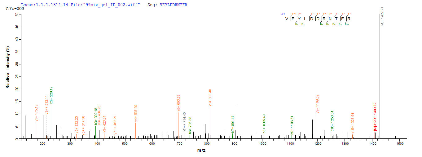 Additional SEQUEST analysis of the LC MS/MS spectra from QP6822 identified an additional between this protein and the spectra of another peptide sequence that matches a region of p53 / TP53 confirming successful recombinant synthesis.
