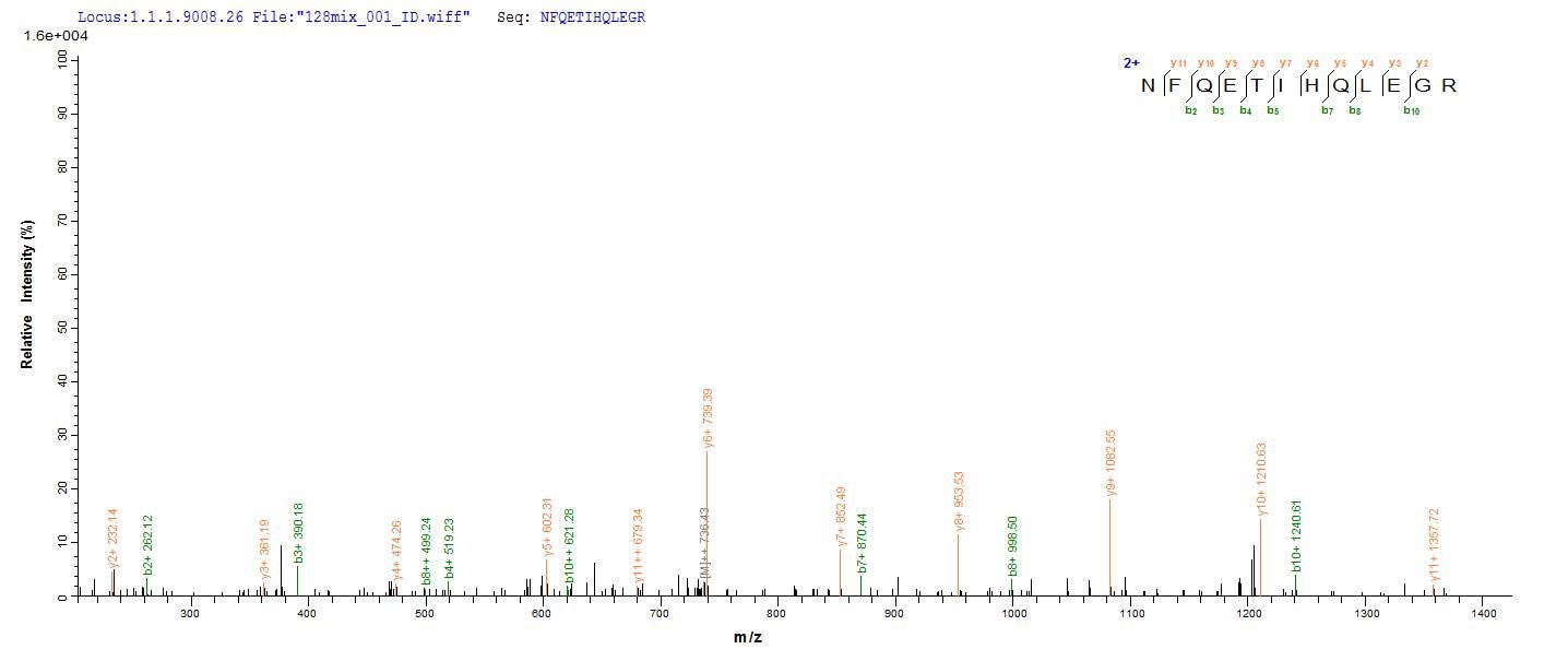 Additional SEQUEST analysis of the LC MS/MS spectra from QP6838 identified an additional between this protein and the spectra of another peptide sequence that matches a region of TNF receptor-associated factor 6 confirming successful recombinant synthesis.