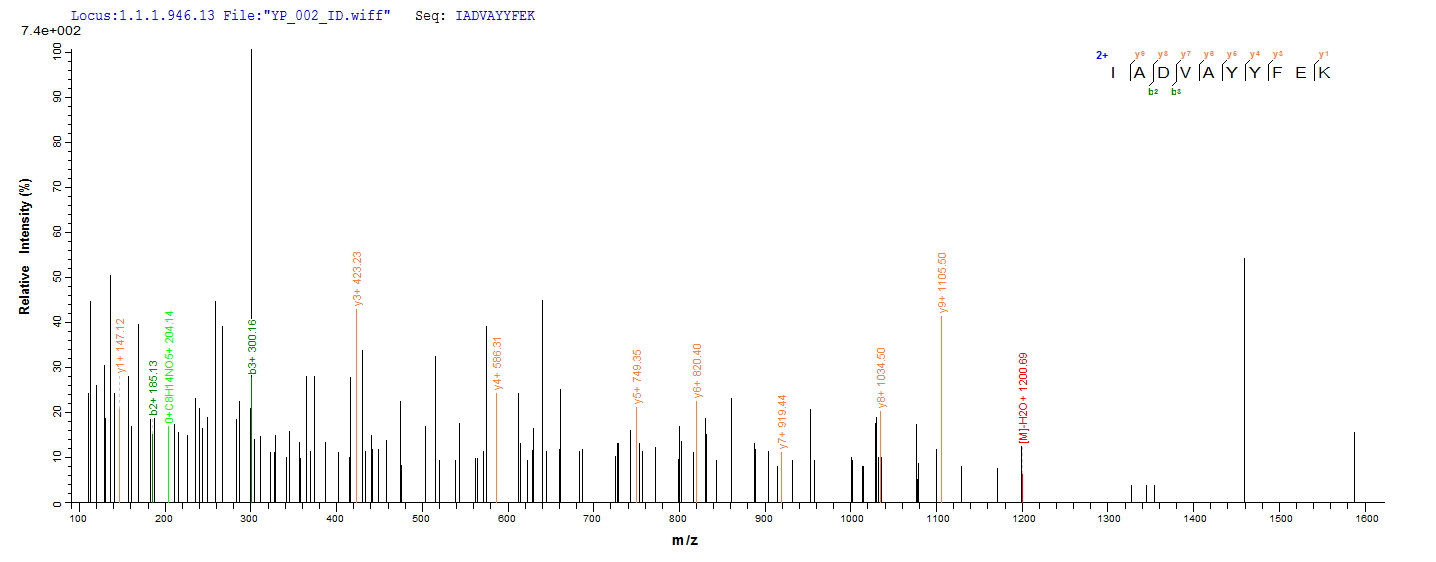 Additional SEQUEST analysis of the LC MS/MS spectra from QP6916 identified an additional between this protein and the spectra of another peptide sequence that matches a region of EpCAM / TACSTD1 confirming successful recombinant synthesis.